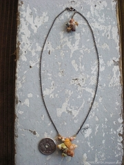 Turbo shell Special Necklace