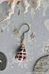 Hebrew cone shell pierce No,4