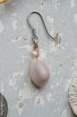 Erosaria annulus Pierce No,3