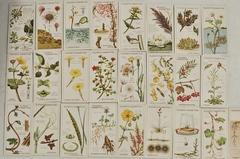 【2390】英国  アンティーク シガレットカード 25枚フルセット ※