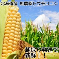 トウモロコシ10本