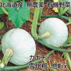 栗かぼちゃ2個 無農薬