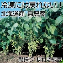 枝付枝豆 無農薬