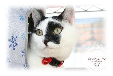 保護猫ポストカード03【ディア】a