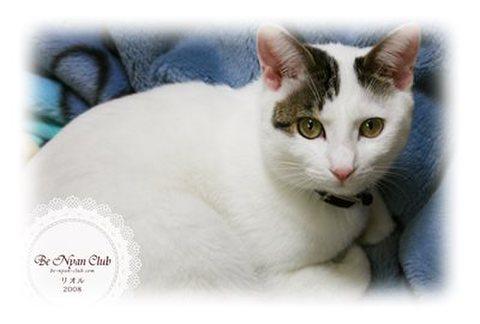 保護猫ポストカード01【リオル】A