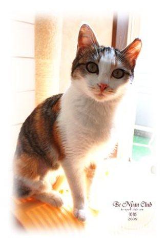 保護猫ポストカード04【美姫】a