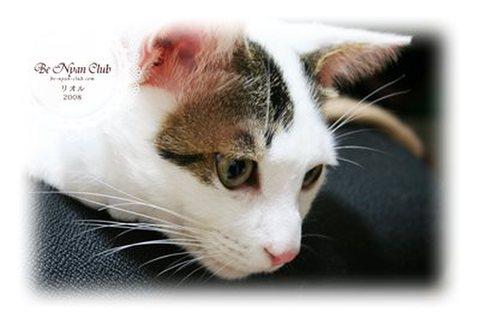 保護猫ポストカード01【リオル】c