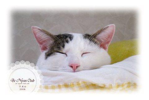 保護猫ポストカード01【リオル】B
