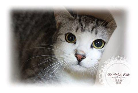 保護猫ポストカード05【雪之丞】a