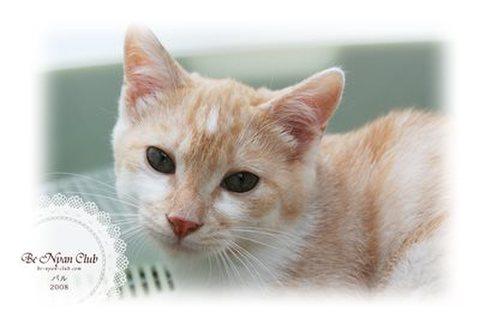 保護猫ポストカード02【パル】a