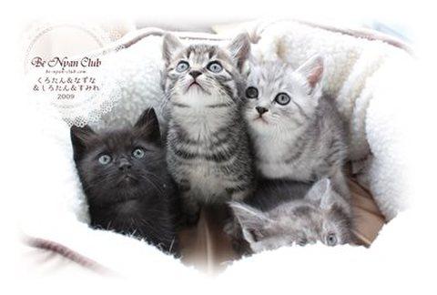 保護猫ポストカード07【金石の子猫たち】