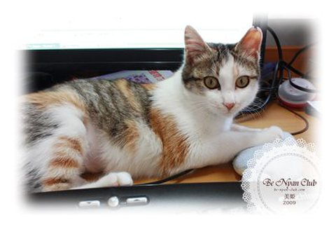 保護猫ポストカード04【美姫】b