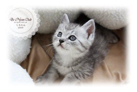 保護猫ポストカード07【しろたん】a