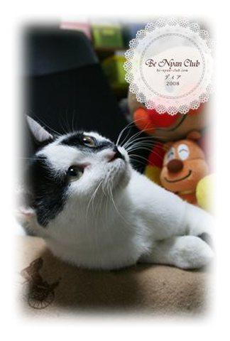 保護猫ポストカード03【ディア】b