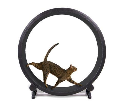 猫用ランニングマシン「Cat Exercise Wheel」