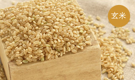 コシヒカリ 10kg 玄米