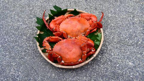 蟹蔵ブランドマングローブ蟹(伊良部島産) 蒸し焼き調理済みの新鮮な蟹