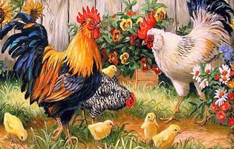 【1-23】A3鶏一家!ひよこと親鳥の日常