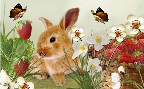【1-51】A3 可愛いウサギといちご