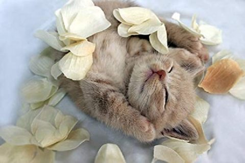 A4額付き!すやすや眠る猫(バンザイ猫)T1-234