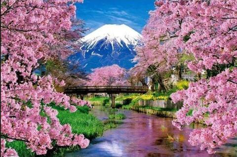 今週のお得商品! A2サイズ 富士山とさくら 日本の春 ダイヤモンドアート