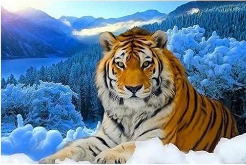【1-83】A3   Square  雪中のトラ