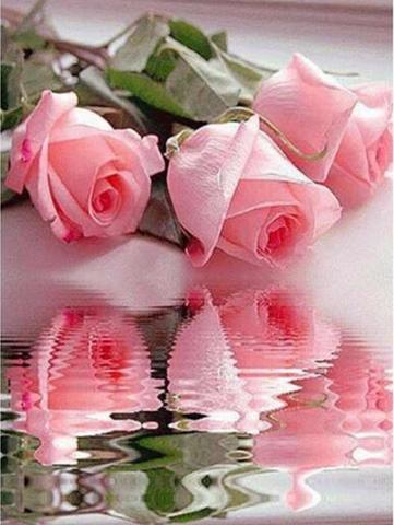 【2-23】A3 薔薇と水に映るバラ