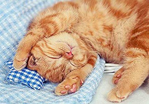 A4額付き!眠る茶トラ猫(可愛い子猫)(kic-A4T1-242)