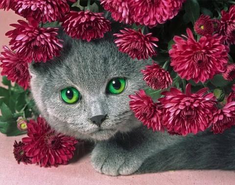 初心者応援!A4額付き【1-34】square 菊にかくれんぼの猫