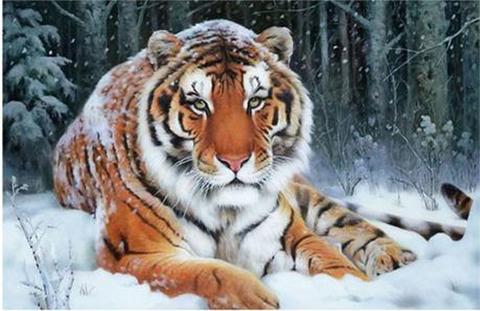 【d1083】雪中の勇敢な虎