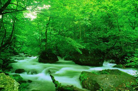 エントリー№r47 A2サイズ 川と森の風景