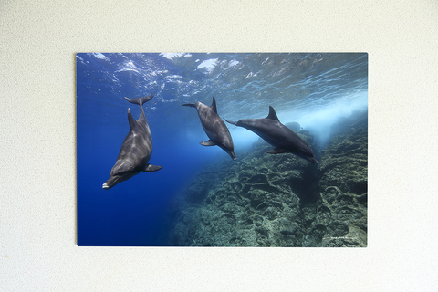 Dolphin Dreaming #002