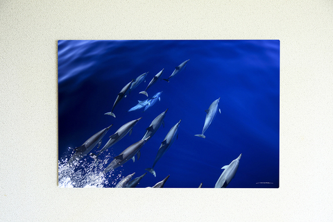 Heavenly Dolphins #007
