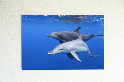 Dolphin Dreaming #001