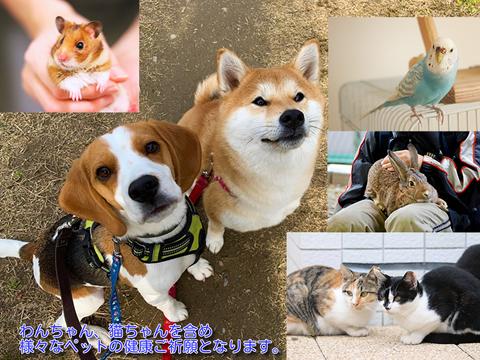 動物ペット守護☆健康祈願ご祈祷・1年御守り護符御札付き☆