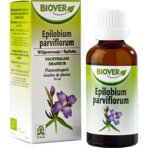 エピクロビウム・パルビフロラムマザーチンキ
