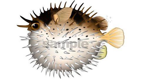 ハリセンボン 魚イラスト (リアル)