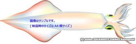 ヤリイカ イラスト Adobe Ai形式/eps形式 (CMYK)