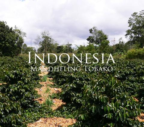 インドネシア マンデリン トバコ 200g
