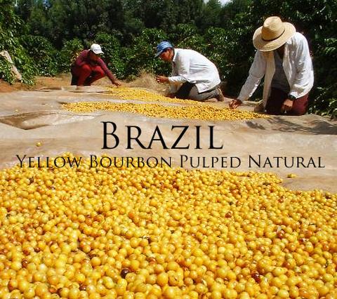 ブラジル イエローブルボン パルプドナチュラル 日陰干し