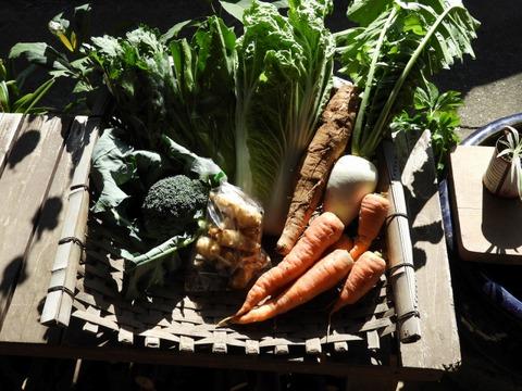 自然農 野菜セット