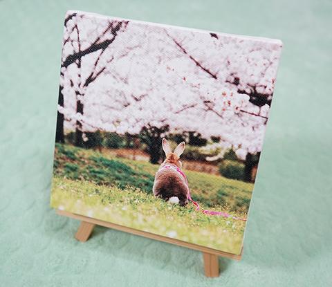 うさぎと桜 インテリアフォト/ファブリックパネル