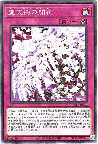 [N] 聖天樹の開花 (2_永続罠/SLT1-JP039)