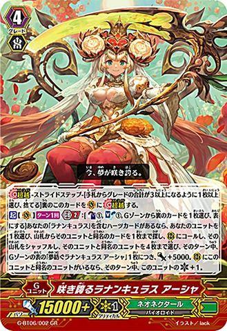 咲き誇るラナンキュラス アーシャ GR GBT06/002(ネオネクタール)