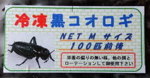 【冷凍は代引・振込銀行限定】冷凍黒コオロギMサイズ(1匹2㎝約100匹入)