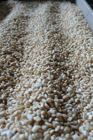 茨城産コシヒカリ米【玄米糀】1kg