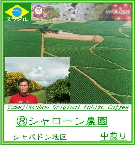 08.ブラジル シャローン農園 シティロースト